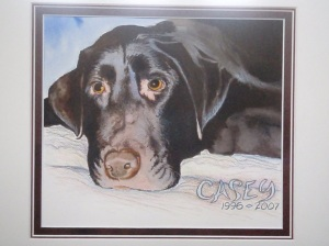 Casey the Labrador Retriever